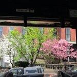 Beautiful flowering trees in residential area