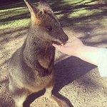 Feeding the Wallaby :)