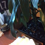 Looking after the guests at Novotel Perth.... Plants on dinning table....disgusting