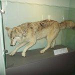 Foto de Inverness Museum and Art Gallery
