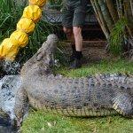 Snakes Downunder Reptile Park