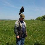 Charlie the Harris Hawk surveys his kingdom!