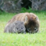 Photo of BIG4 Kelso Sands Holiday & Native Wildlife Park
