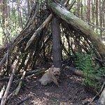 Dog friendly Delamere Forest