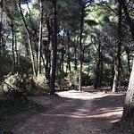 The pine wood going to Mandraki beach