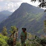 Photo de Nuwara Elia et pays du thé