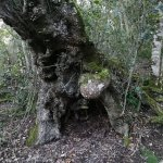 Teniqua Treetops Bild
