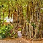 Photo de Key West Garden Club