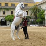 Royal Andalucian horse show - 1