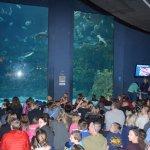 NC Aquarium at Fort Fisher - Gathering for the Weeki Watchee Mermaids
