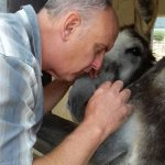 The Sanctuary Donkeys are so gentle and love affection.