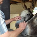 So gentle and so affectionate. Rescued Donkeys at the El Refugio Sanctuary.