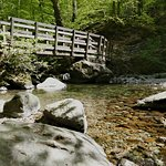 Stock Ghyll Force,on the path to