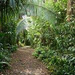 Jungel trail