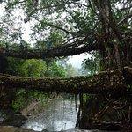 double decker root bridge