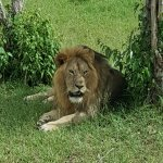 Photo de Go Kenya Tours and Safaris