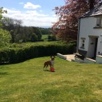 We're here again, hornbeam cottage home from home. For us it is the Perfect doggie holiday, we h