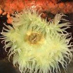 Shedd Aquarium Foto