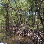 The Everglades, Florida's environmental gem!