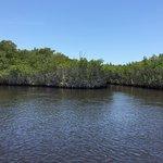 More Everglades!