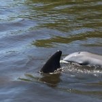 Mother Dolphin playing with her baby!!!