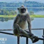 Photo of Heritance Kandalama