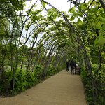 A flowered tunnel in the garden