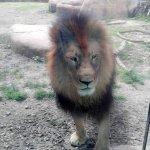 Photo of Peoria Zoo