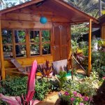 My Hut surrounded by luxurious colorful plants & flowers !