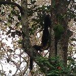 Giant squirrels eating jackfruit