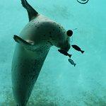 phoque vision sous marine