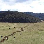 Militang meadow area