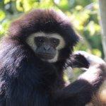 Photo de Parc Zoologique d'Amneville