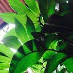 Foto de Hostal El Jardin