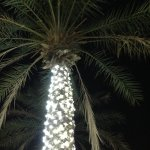 Palms with lights.
