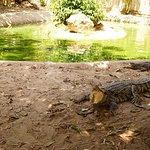Samui Crocodile Farm Foto