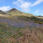 Bluebells at Rannerdale