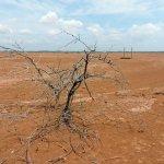 Wüste - trocken, heiß, staubig.