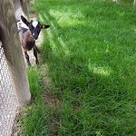 Photo of Parco Zoo Punta Verde