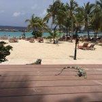 Iguana terrace