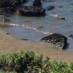 Elephant Seal Rookery Foto