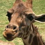 Foto de Wildlife World Zoo and Aquarium