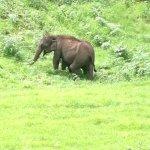 Foto de Rajamalai (Eravikulam) National Park