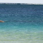 A dolphin swimming in Turquoise Bay