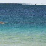 Foto de Turquoise Bay