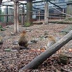 Photo of Tierpark Aachen