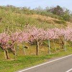周囲の果樹園