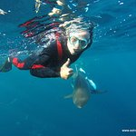 Diving around the sharks