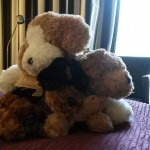 Nice welcoming by soft toy animals :-)