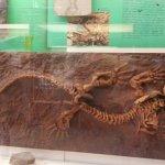 Photo de Civico Museo di Storia Naturale